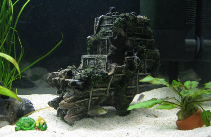 malawi aquarium kaufen teil 2 malawibecken und zubeh r. Black Bedroom Furniture Sets. Home Design Ideas